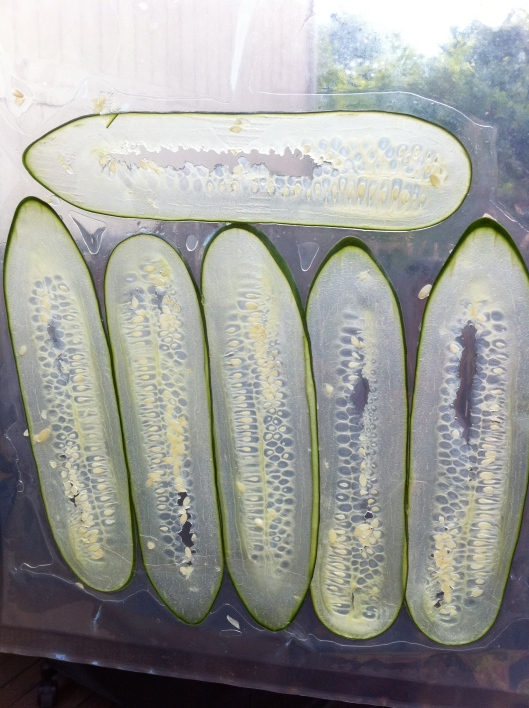 Vacuumed Sealed Cucumber